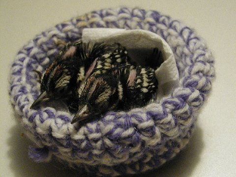 Crochet & Knit Artificial Nests