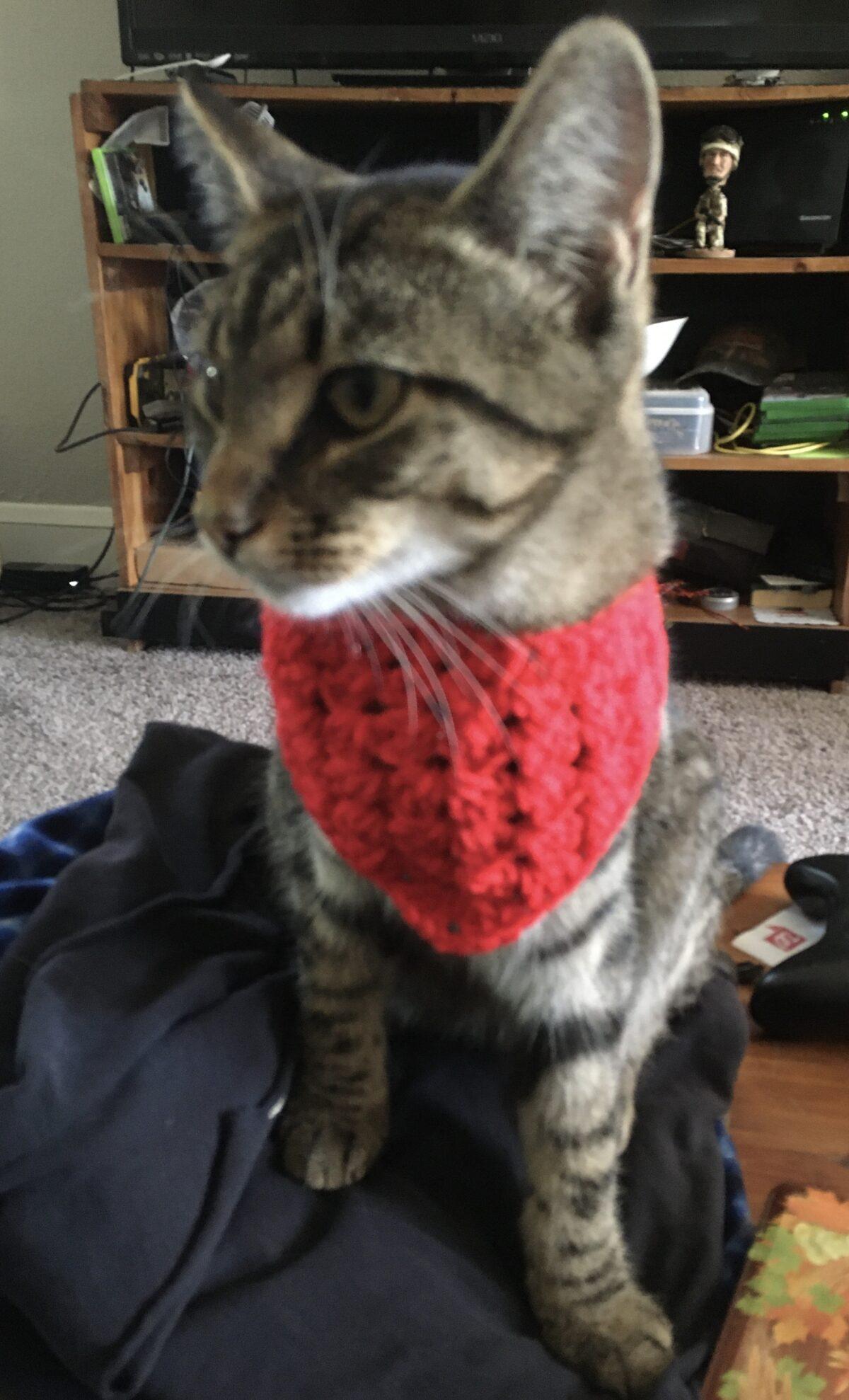 Pet Scarf Crochet Pattern